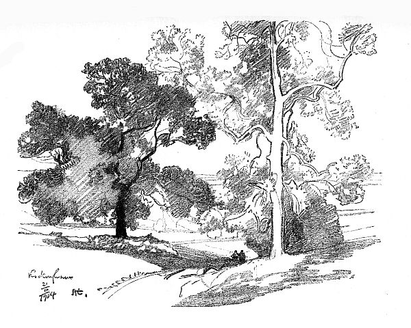 pencil sketch of trees