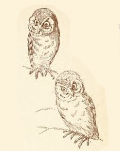 Owls, by E. Boyd Smith