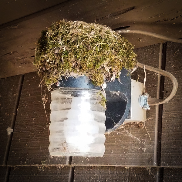 bird's nest on porch lighty