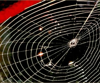 Photo of spider web