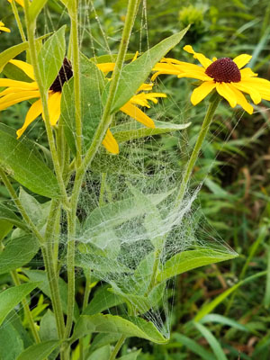 Spider web attached to flower
