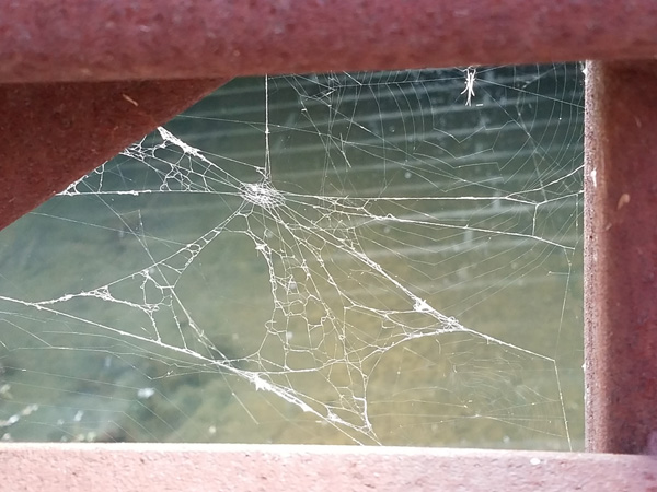 Spider web in tatters