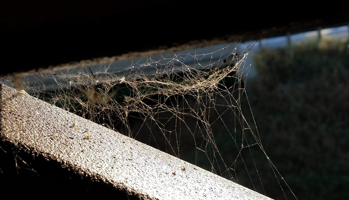Spiral Web on railing