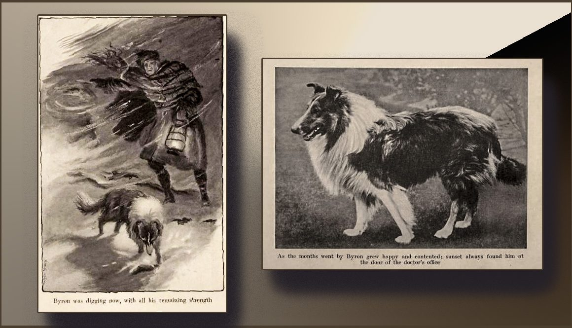 pictures of sheep dog
