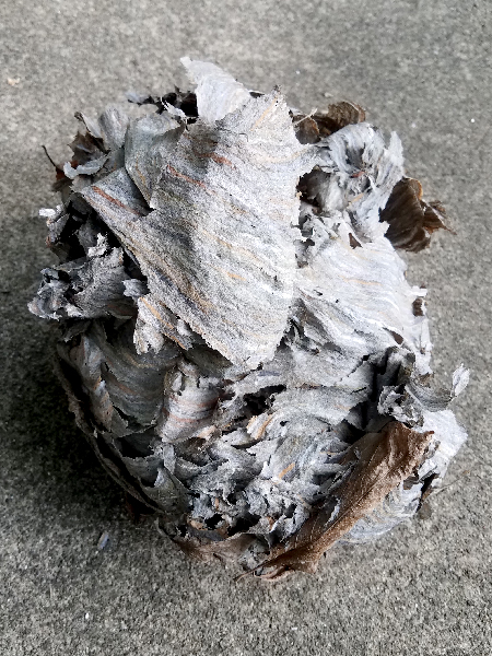 photo of paper wasp nest