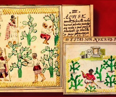 Watercolor paintings of cochineal, 1775