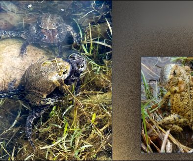 Photos of Toads
