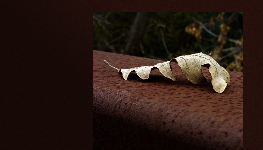 Fallen oak leaf on bridge railing