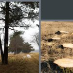 Trees and tree stumps