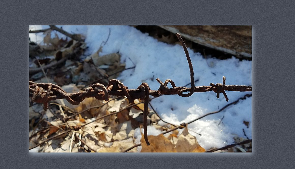 photo of rusty barb wire