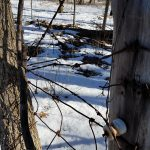 Photo of old electric fence