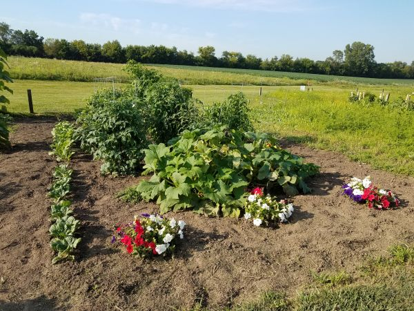 Photo of 15 x 30 foot vegetable plot
