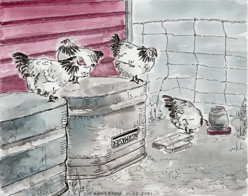 watercolor of 4 chickens