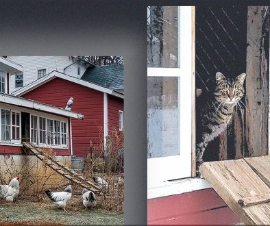 barn cat and chicken coop